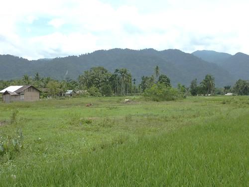 Bukit Lawang - Région (18)