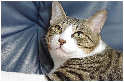 なぜか座椅子で爪を研ぐ子猫たち・・・