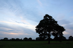 228/365 - Oh no, not 'that' tree again... (catcat78) Tags: summer sky tree clouds rugby thattree 160810 catcat78 hpad160810