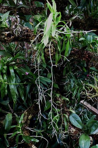 botanic - 01