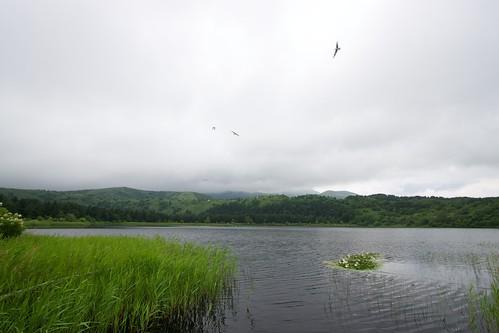 利尻山が見えないオタトマリ沼