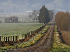 Country Road (Ian@NZFlickr) Tags: road morning mist country nz otago dunedin farms aotearoa taieri spotofsunthough