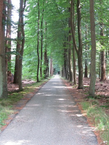 Cycle paths west of Zwolle