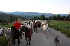 Hpica Prats II (magic penguin ^^) Tags: horse caballo caballos manda cavall hpica cavalls prats