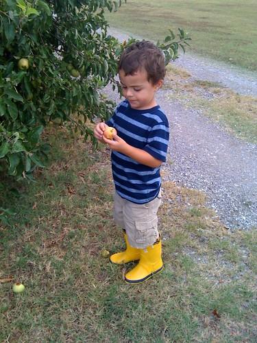 lucas boots