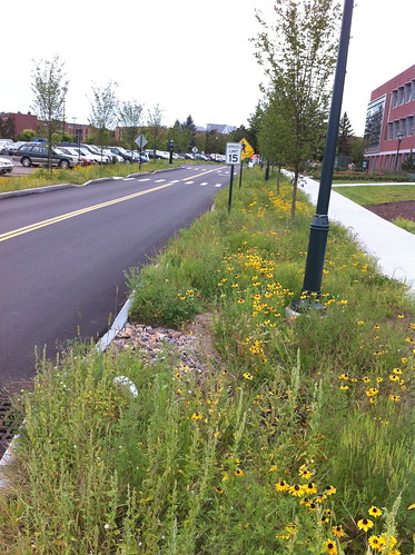 Bioswale near Jeffords