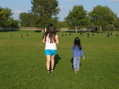 Girls Walking Towards Geese