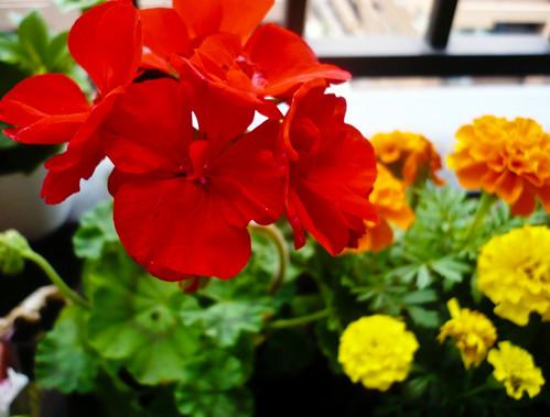 My garden 0009 June 13, 2010