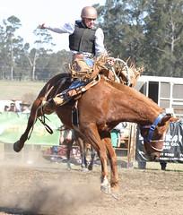 IMG_4243e (EbonyJ) Tags: horses horse food danger death rope bull bulls falls falling riding bones rodeo brocken ropes broncos potties steers roping brumbies commotion carnige pominoz doctorj73