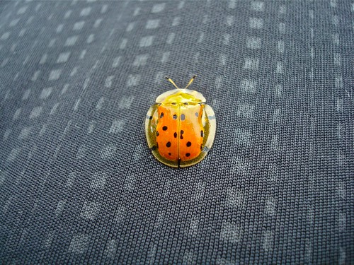 Bug on a Pattern