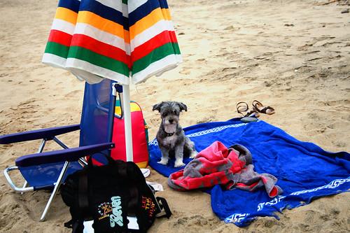 Michi la simpaticissima cagnolina in spiaggia