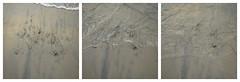 Sea Grass (iandavid) Tags: ocean california beach square triptych pacific sandiego lajolla pacificocean
