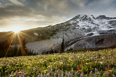Moments (Vinnyimages) Tags: flowers sunset mountain canon landscape washington nationalpark northwest mountrainier rainier cascades pacificnorthwest canon5d wildflowers washingtonstate cascademountains vinnyimages wwwvinnyimagescom vinnyimagescom