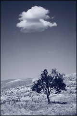(seyed mostafa zamani) Tags: city sky cloud color tree nature look landscape happy hope heart iran earth azerbaijan east kind serenity only particle imagination concept moment conceptual now sense expectation transient         marand