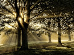 Avenue Alight (algo) Tags: road trees light sunlight dawn topf50 topv333 bravo branches topv222 rays trunks algo topf100 sunbeams mywinners saariysqualitypictures bestofmywinners