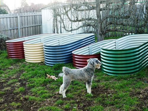 Lottie Inspecting Her Colorbond Veggie Beds