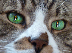 eyes alight