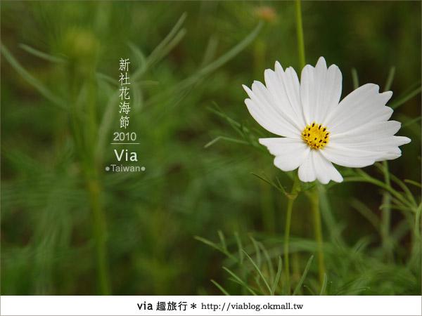 【新社花海】新社花海2010~via拍回來的最新花況10