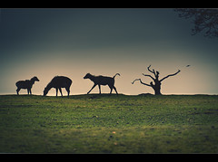 Safari park (Ianmoran1970) Tags: tree grass animal animals canon landscape photography safari tone 50d ianmoran ianmoran1970