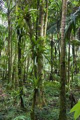 juhnke rainforest    DSC08269 (scottcsmith) Tags: rainforest sony pr peurtorico sonyalpha550 scottcsmith