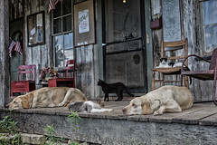 Hillbilly dawgs & cats celebrate July 4th on Penn's Store porch, Gravel Switch (sniggie) Tags: marioncounty dogs gravelswitch southern porch pets pennsstore generalstore hollow cats hillbillylife mountainlife kentucky caseycounty