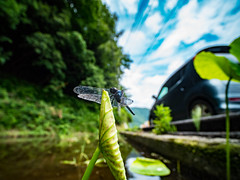 PhoTones Works #8966 (TAKUMA KIMURA) Tags: olympus air a01 photones takuma kimura 木村 琢磨 風景 景色 自然 landscape nature snap insect dragonfly 虫 蜻蛉 トンボ