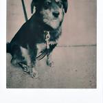 Tibi's first polaroid thumbnail