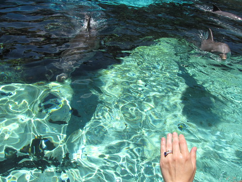 Reaching out to dolphins
