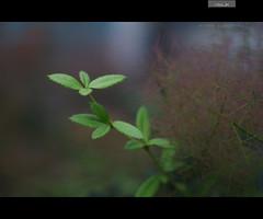 So Far & So Close (VitorJK) Tags: green beauty canon 50mm hungary close 14 budapest sigma far hu 30d gardem