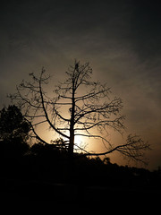 T_Silhouette (Amit Bhardwaj_Dilli) Tags: eve sunset india mountains tree evening asia walk branches hills silhoutte himachal himalayas eveningwalk bharat himachalpradesh southasia northindia hindustan solan juit waknaghat flickrunitedaward jaypeeuniversity dpssilhouettes