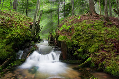 Coldwater Creek (Billy Wilson Photography) Tags: longexposure trees summer ontario canada nature wet water leaves digital creek forest photoshop canon river flow outdoors eos rebel spring woods ruins stream dam ruin july ground soil bark springs brook xs soo northern lightbeams saultstemarie northernontario algoma fishhatchery cs4 troutstream brooktrout billywilson coldwatercreek billywilsonphotography saultphotographer