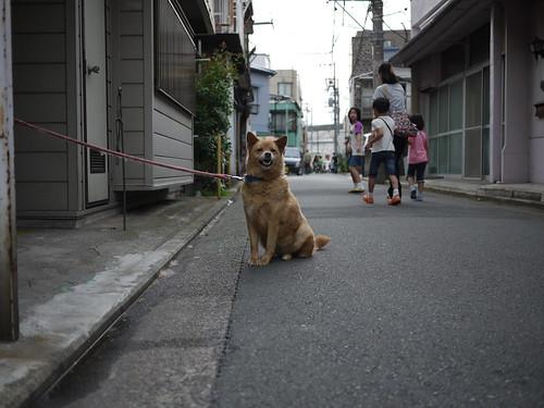通学路の番犬ちゃん