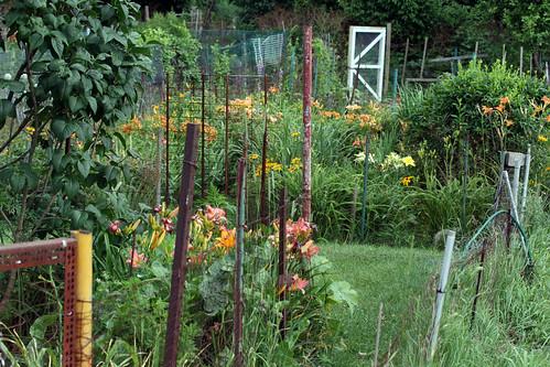 flower garden 083