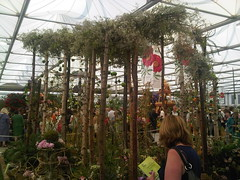 Tillandsias (Alwyn Ladell) Tags: chelsea flowershow rhs royalhorticulturalsociety royalhospital