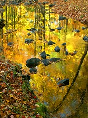 Looking Forward to Autumn (Stanley Zimny (Thank You for 14 Million views)) Tags: park autumn trees reflection tree fall nature water colors leaves yellow automne catchycolors gold leaf rocks colorful colours seasons natural fallcolors herbst nj autumncolors fourseasons autunno autumnal colorexplosion 4seasons ringwood jesiennie 100commentgroup