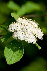 Flowers in bloom (troter59) Tags: flower nikon flor nikkor 80200 d90 parcdepedratosca