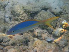 Fish 2 (Michael G. Baron) Tags: cruise florida royal snorkeling coco caribbean bahamas nassau cay