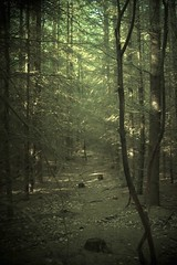 moody forest (sole) Tags: trees light holland art nature beauty dutch forest dark landscape photography photo europe flickr foto fotografie solea sole carmengonzalez