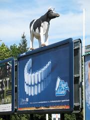 bevete pi latte (laBalza) Tags: slovakia latte calcio pubblicit nitra