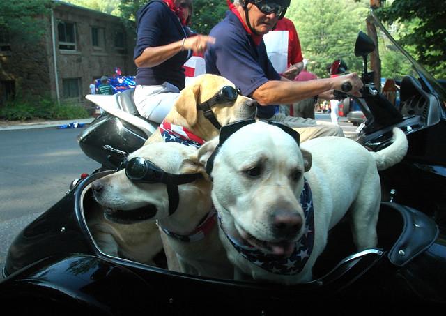 Sidecar dogs