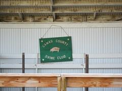 Swine Club