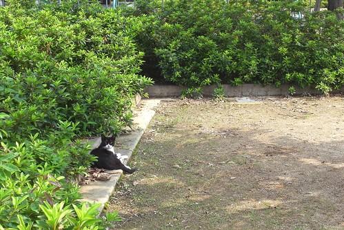 Today's Cat@2010-07-08