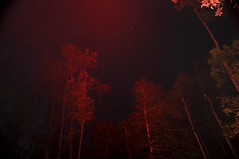 Red Knight (hksmith02 (Away for while)) Tags: trees red creek forest stars nikon space 4th july 18200 nightexposure villagecreek nationalpreserve d90 southeasttexas bigthicket timedexpoure