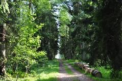 Sadamatee (anuwintschalek) Tags: road wood sea summer forest island see meer estonia path sommer strasse july baltic insel wald tee ostsee mets meri itmeri rada sadam 2010 saar eesti suvi pfad estland aegna 18200vr nikond90 lnemeri vanagram