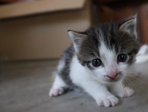 [フリー画像] 動物, 哺乳類, ネコ科, 猫・ネコ, 子猫・小猫, 201007142300