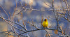The first promise of Spring! (Martin_Heigan) Tags: camera winter flower male bird nature birds yellow digital southafrica succulent spring nikon dof martin bokeh photograph d200 dslr sunbird plumage capensis ploceus suidafrika winterflowers capeweaver sunbirds suikerbekkie heigan 70300mmf4556gvr aalwyn vetplante wsnbg mhsetbirds mhsetbokeh suikerbekkies 3july2010 winterblomme