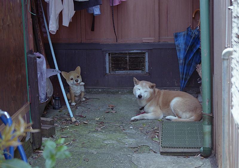 笑顔犬と作り物の犬