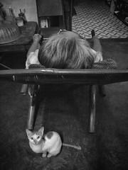 pusa ni lola (jobarracuda) Tags: cat chair lola kitty oldwoman pusa bagongsilang jobarracuda jojopensica pensica