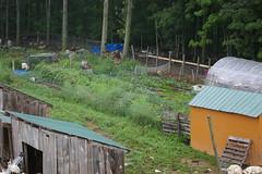 The Veg Garden