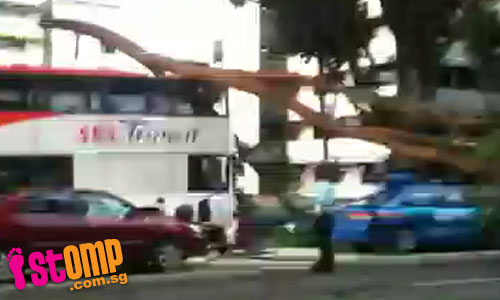 Branch falling on bus causes massive jam on AYE towards city